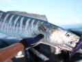 Sport Fishing TV | Episode: Bermuda Wahoo & Tuna