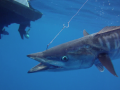 Sport Fishing TV Bermuda | Episode: Bermuda Wahoo & Tuna